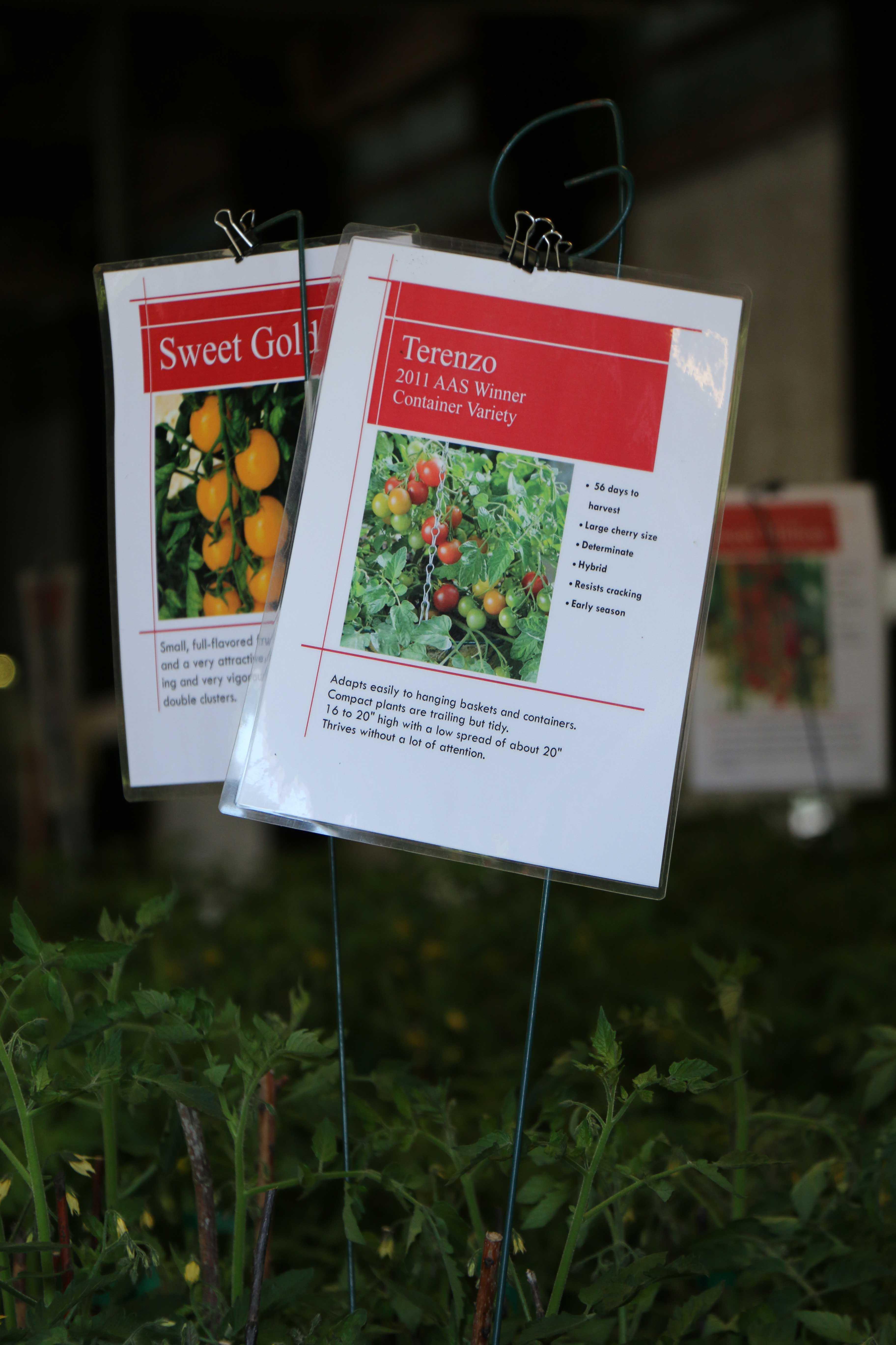 Tomato Signs